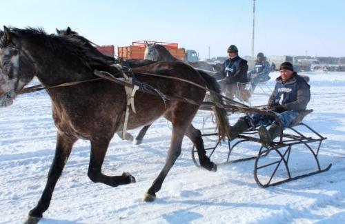 Варненский конь – огонь! В поселке Бреды прошли ежегодные конно-лыжные соревнования