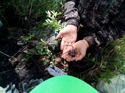 Умные каникулы. Школьники Варненского района провели неделю с пользой для ума, науки и родного муниципалитета